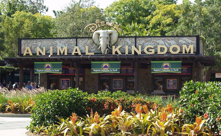 Animal Kingdom.