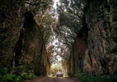 Хайнань-дарит-возможность-созерцать-великолепие-природного-ландшафта-и-гарантирует-незабываемые-впечатления-от-реликтового-леса