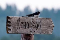kenozero13