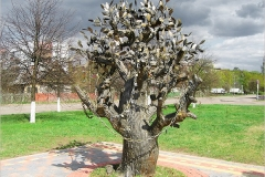 kirovsk-tree