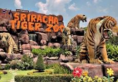 Тигровый-зоопарк-9