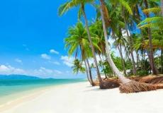tropicheskiy_plyazh_s_kokosovymi_palmami_tailand