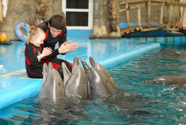 Рейтинг лучших дельфинариев Краснодарского края